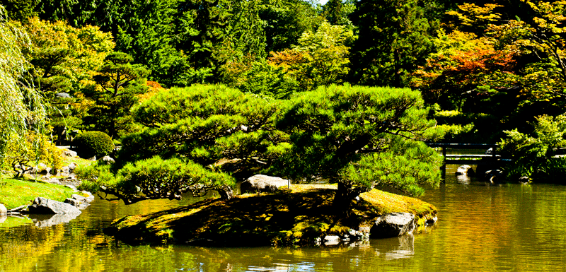 Pond and Pines Seattle Japanese Garden